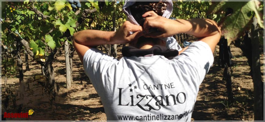 CANTINE LIZZANO / Assovini.it